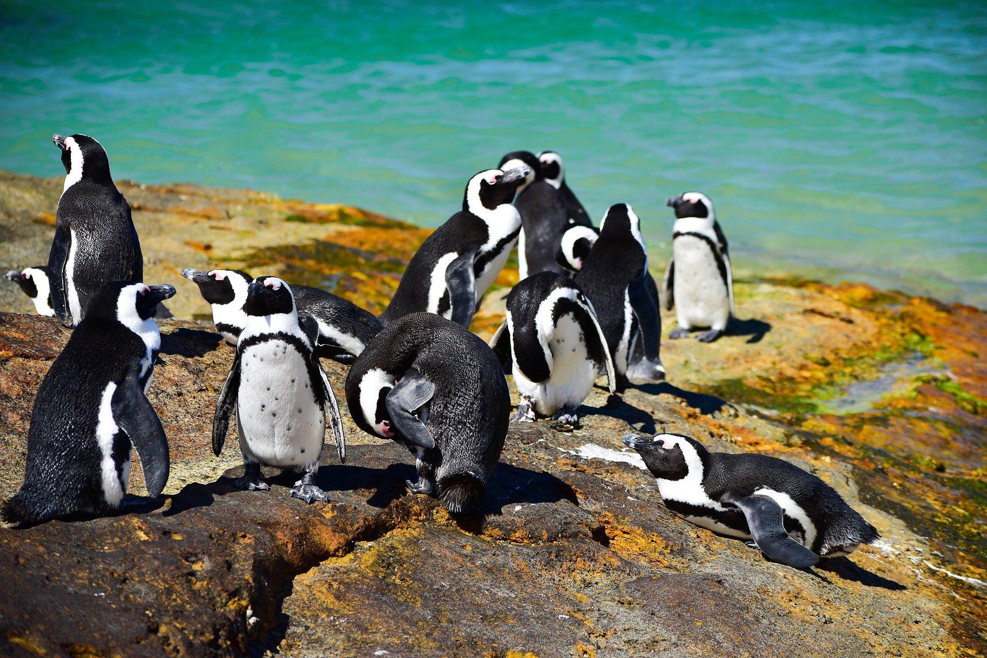 pingvinek tudják)
